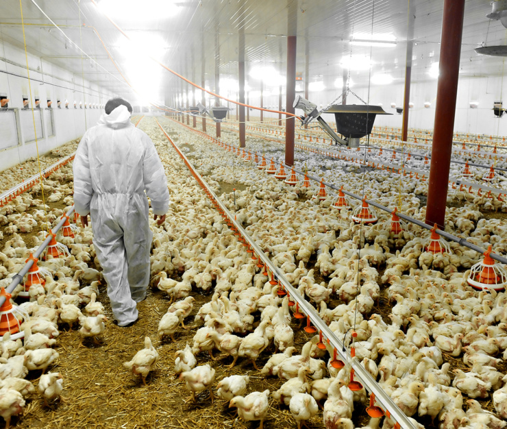 Zivo Bioscience Releases Positive Results From Recent Poultry Trial