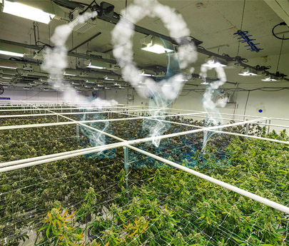 Should Greenhouse Gas Emissions Affect Your Cannabis Investment Decision?